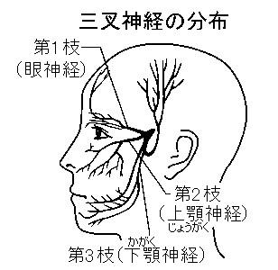 新潟 整体 舌咽神経痛